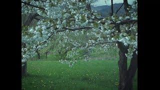 Video The Kowal Chicks - Pred riekou Čen (在郴河前面) OFFICIAL VIDEO