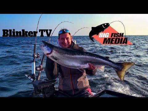 Lachs: Angeln auf Lachs - Der König der Ostsee