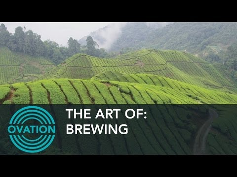 Brewing - Where do Tea Leaves Come From?