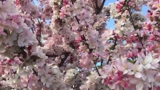 Nonton The Colors Of Spring In Colorado Film Subtitle Indonesia Streaming Movie Download