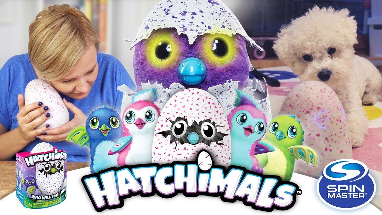 Hatchimals Jajko, Spin Master - Unboxing - Część 1