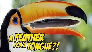 MY TOUCAN HAS A FEATHER FOR A TONGUE?! (Pet Toucan)