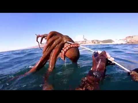 Pesca Submarina - Summer III - Portugal - 2016