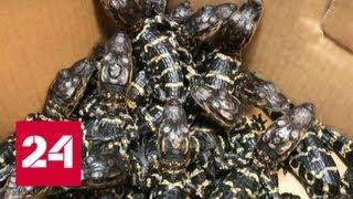 В чемодане прилетевшего в Москву туриста нашли скорпионов и 30 крокодилов — Россия 24