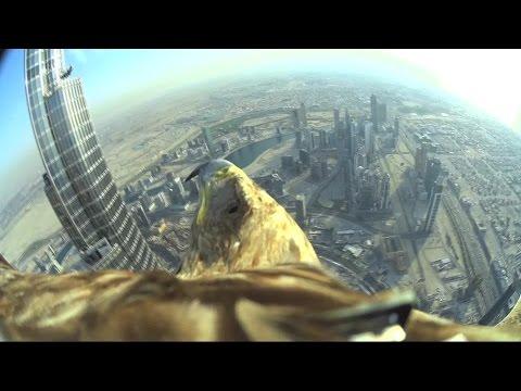 aquila filma il nuovo record mondiale dal palazzo più alto di dubai