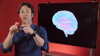 Your Brain is You - Learning and Memory