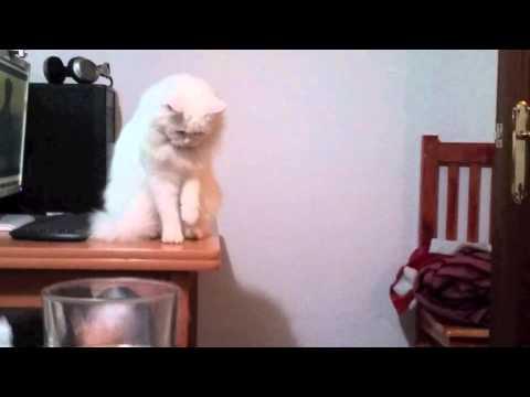 il-gatto-che-fa-le-pulizie-di-primavera-89