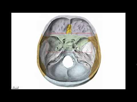 CRANEO 3 - ESFENOIDES Diagnostico X