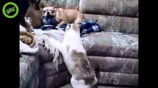 Куче, което го е страх от котка!