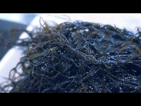 Sea Venom! MOZUKU noodle salad and soup - Japan food eating - Thời lượng: 13 phút.