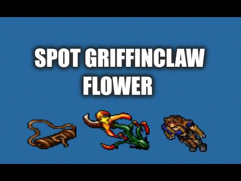 MOSTRANDO SPOT DA GRIFFINCLAW FLOWER! (DRUID OUTFIT QUEST SPOIL)