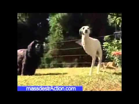 perros sorprendentes
