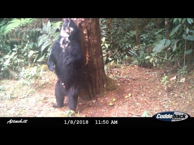 Así registramos la fauna silvestre en el Huila