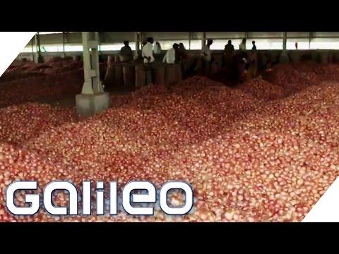 Indien & Zwiebeln: Darum sind Zwiebeln in Indien so b ...