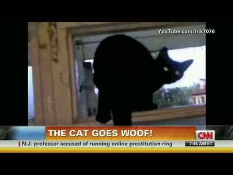 Kissa haukkuu kuin koira — Ihmiset nauravat vedet silmissä kohdassa 0:36