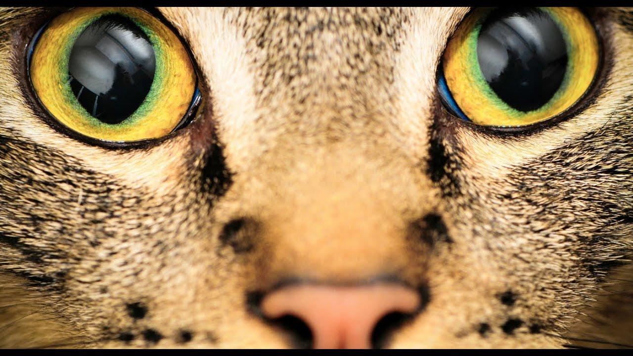 Как сделать глаза как у кошки макияж Визаж и здоровье глаз 35
