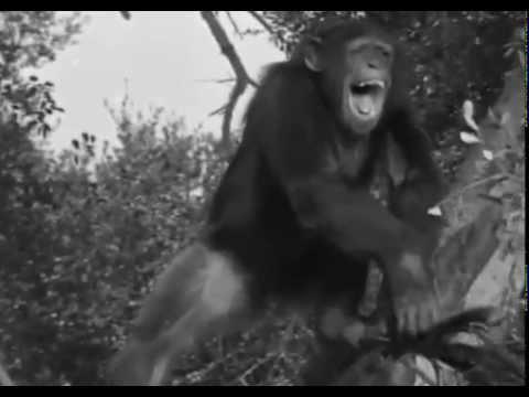 Video 2 Tarzan S'Evade   1936 aventure download in MP3, 3GP, MP4, WEBM, AVI, FLV January 2017