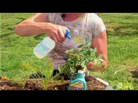 Vegetable Gardening : Home Remedy for Flies on Vegetable Plants