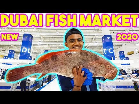 Dubai Fish Market - WaterFront Market in Dubai - World's Best Market