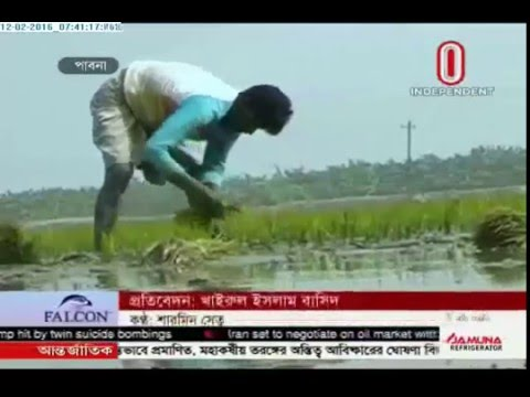 Boro cultivation (12-02-2016)