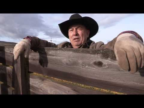 Cowboys and Cattle  - EPISODE 10