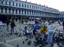 St Mark's Square (venice)