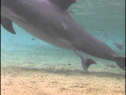 Watch a Mother Dolphin Give Birth in Hawaii