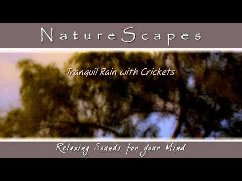Crickets in the Rain, Soothing Sounds for Tinnitus & Sleep Apnea