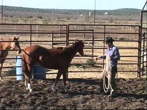 Training a Horse to be a Cowboy's Partner