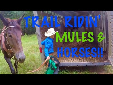 TRAIL RIDING MULES & HORSES