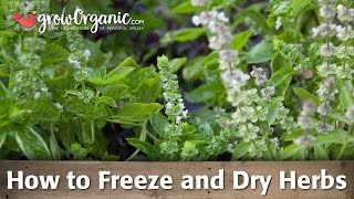 Freezing Herbs and Drying Herbs