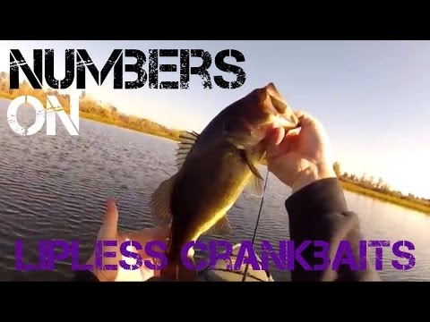 Bass Fishing- Numbers on Lipless Crankbaits (2013)