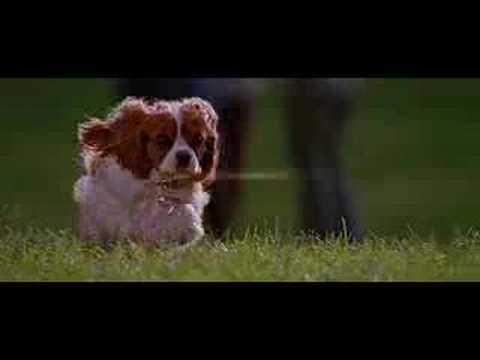 Underdog Underdog (Trailer)