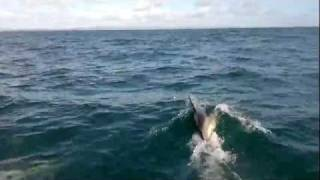 dolphins i videoed from the boat