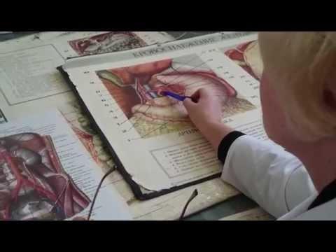 Анатомия. Кровоснабжение брюшной и грудной полостей