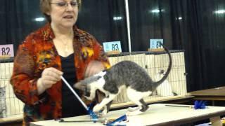 Indy Cat Club, 30-31 Oct 2010.