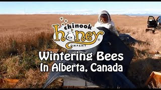 Wintering Bees in Alberta (2016)