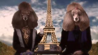 Tush MD French Poodles Animation