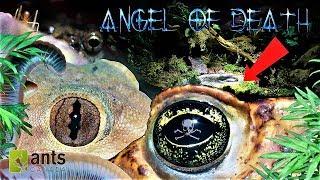 ANGEL OF DEATH/Guardian Goblin/DEATH SPRITES: Creatures Saving My Ant Empire