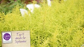 In this video Mike tells us his top 5 shrubs recommended for planting in September.Visit http://www.glebegardencentre.co.ukLike us on Facebook - http://www.facebook.com/glebegcFollow us on Twitter - http://www.twitter.com/glebegc