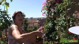 #1313 Tipps und Tricks zum Anbau von Tomaten im Topf auf Balkon oder Terrasse mit Sabine Reber