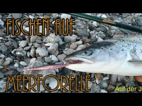 Meerforelle: Jagd nach dem Ostseesilber - Meerforellen fischen an der Ostsee