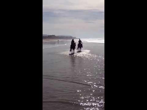 Horseback Riding in the Ocean in San Diego