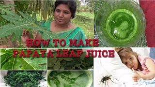 A LIFE SAYING DRUG FOR DENGUE AND MALARIA  HOW TO MAKE PAPAYA LEAF JUICE  HEALTHY VILLAGE FOODDengue is a virus transmitted by the Aedes-type mosquito  Dengue fever severely brings down the blood platelet count in Dengue affected personPapaya leaves have strong anti-malarial properties. A compound found in papaya leaf is acetogenin, which can help prevent dangerous disease like malaria and dengue.Papaya leaves also contain high amounts of vitamins A, C, E, K, and B and mineralsFirst matured leaves has to be plucked and thoroughly washed in waterHave to cut them in to small pieces and grind it into a pasteYou can also remove stems or other fibrous matter and grind only green part of the leafAfter that it has to be squeezed well to take out every drop of the juice from the leafThe Juice will be very very bitter in taste and Dengue affected person can have it about 30-40 ml three times a dayFor children it can be given by adding honey