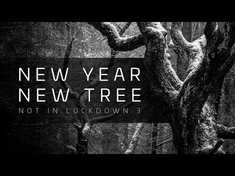 Arboribus // New Year New Tree // Woodland Photography