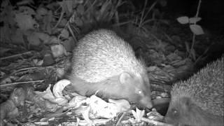 Wildlife Trail Camera - 27.10.2016
