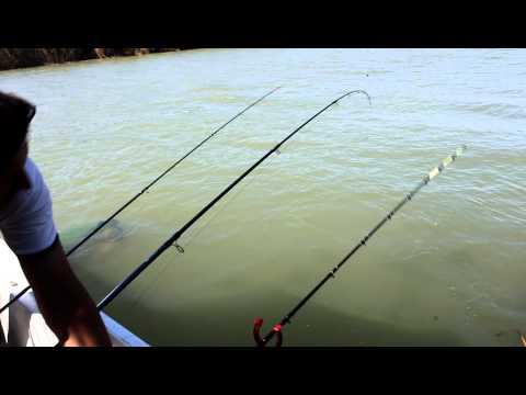 видео ловля сазана на удочку видео