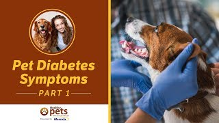 Pet Diabetes Symptoms (Part 1 of 2)