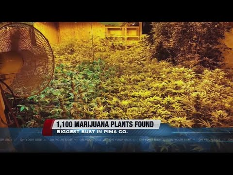 Deputies bust one of largest indoor marijuana grow operations they've seen in Pima County