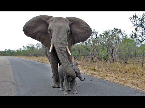 slonica-poskramia-ciekawosci-swojego-dziecka